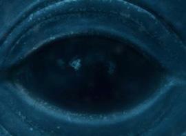 Das Größte Tier ist der Blauwal