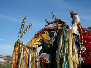 Indien - Elefant