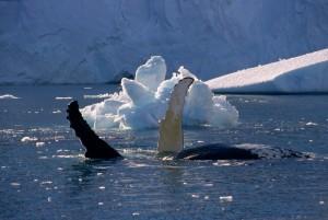 Nordost Nationalpark in Grönland