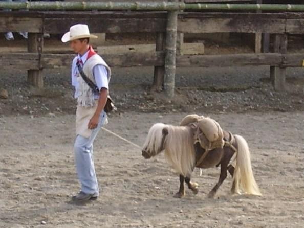 Wie Groß Ist Das Größte Pferd Der Welt