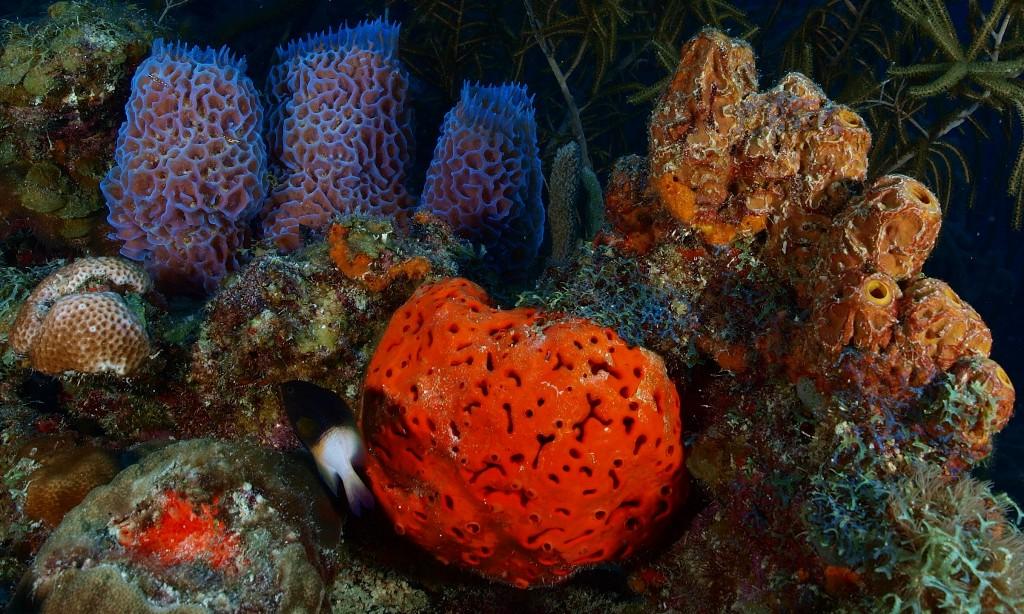 Am Korallenriff von Los Roquez