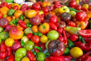 Hunderte Verschiedene Tomaten