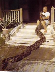 Eine Schlange zum Kuscheln