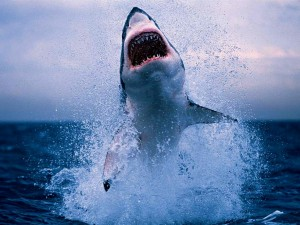 Eine atemberaubende Aufnahme eines Weißen Hai