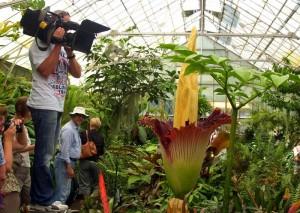 Die Größte Blume der Welt
