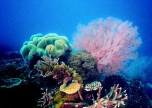 Farbenfrohe Unterwasserwelt am Great Barrier Reef