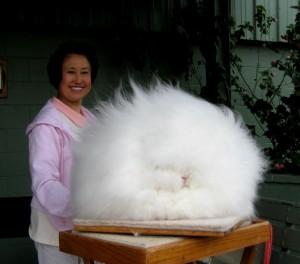 Wohl das Fluffigste Kaninchen der Welt