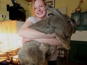 Das größte Kaninchen der Welt